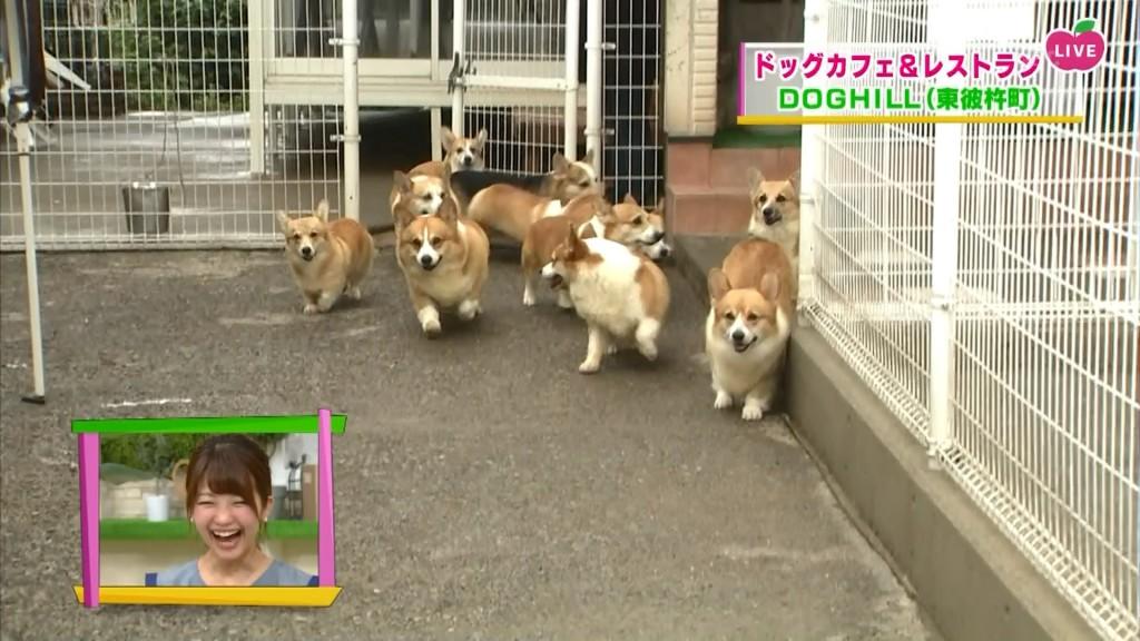 犬j 出会い