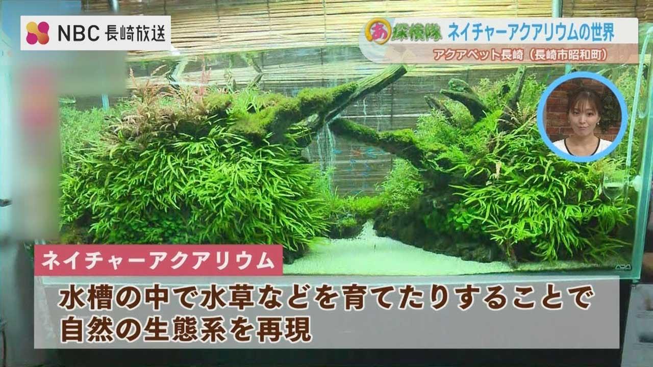 人気の爬虫類と熱帯魚